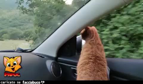 Papuc in automobile che guarda fuori dal finestrino
